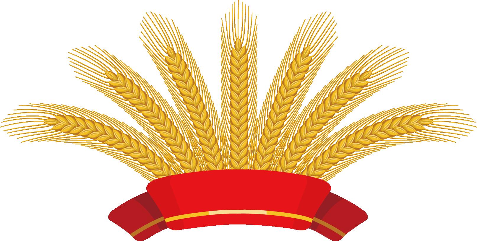 Common ear clip art. Wheat clipart wheat harvest