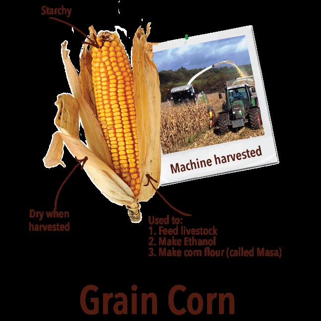 Crops sweet corn