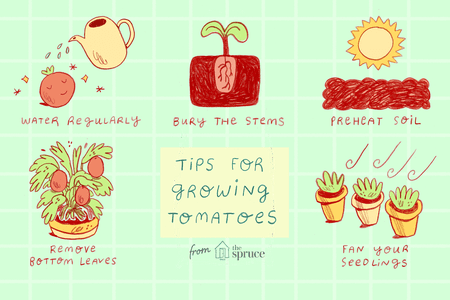Tomatoes clipart tomato stem.  tips for growing