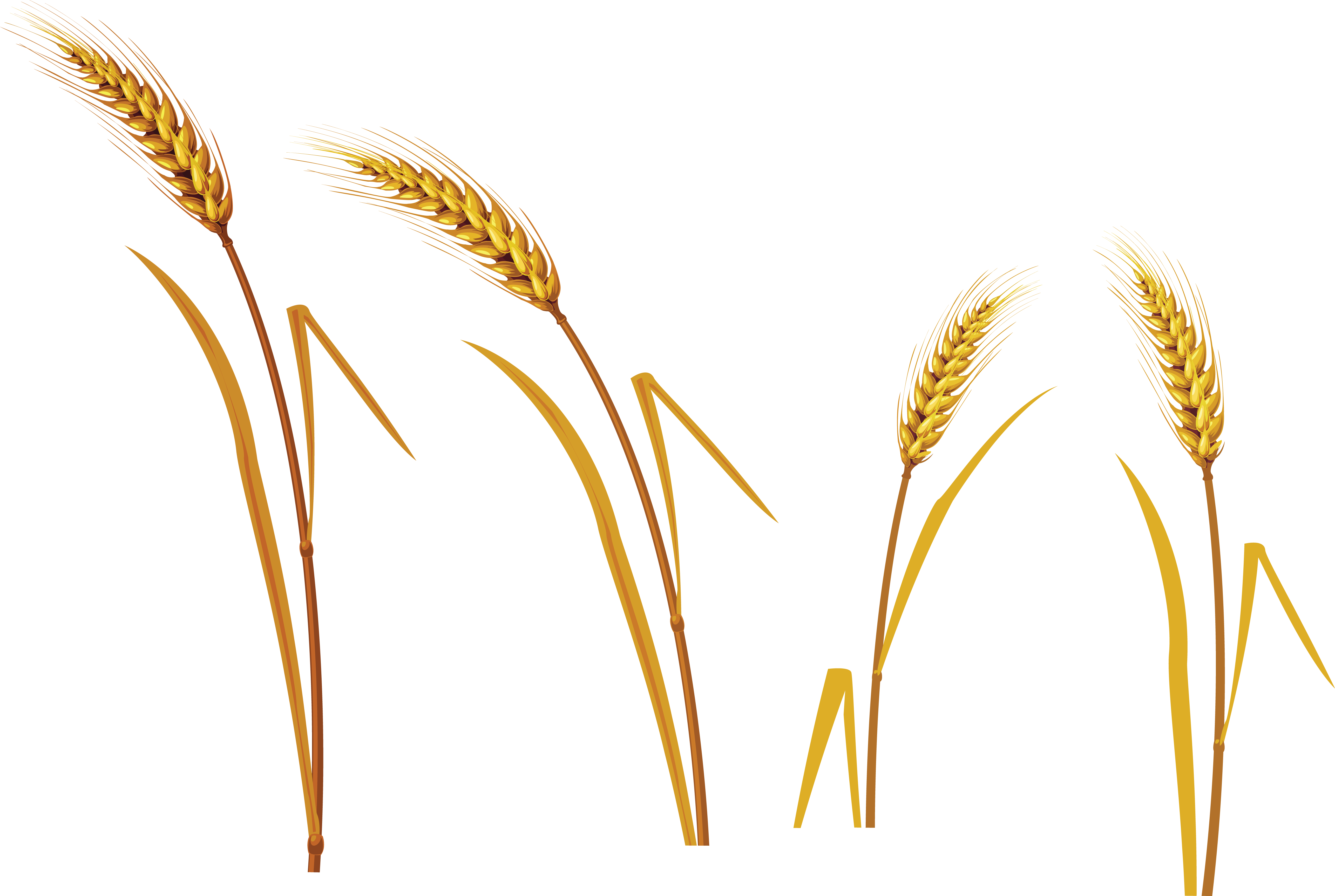 Png . Crops clipart wheat barley