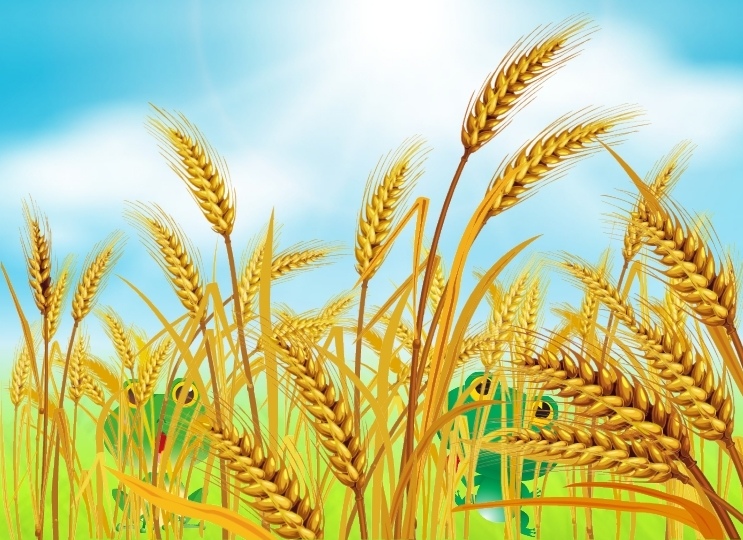 Resolution crop . Crops clipart wheat barley