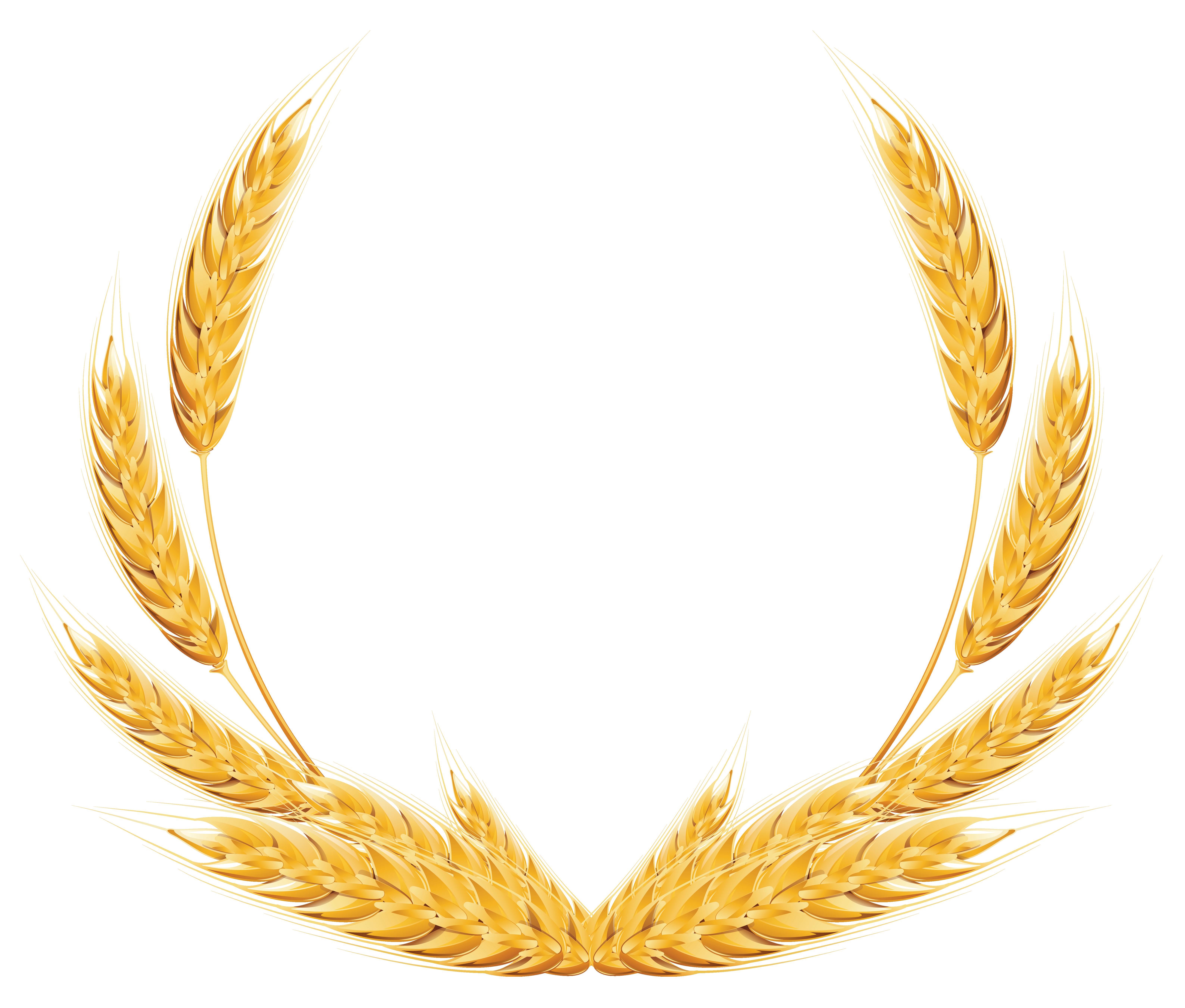 Wheat png . Grain clipart cereal grain