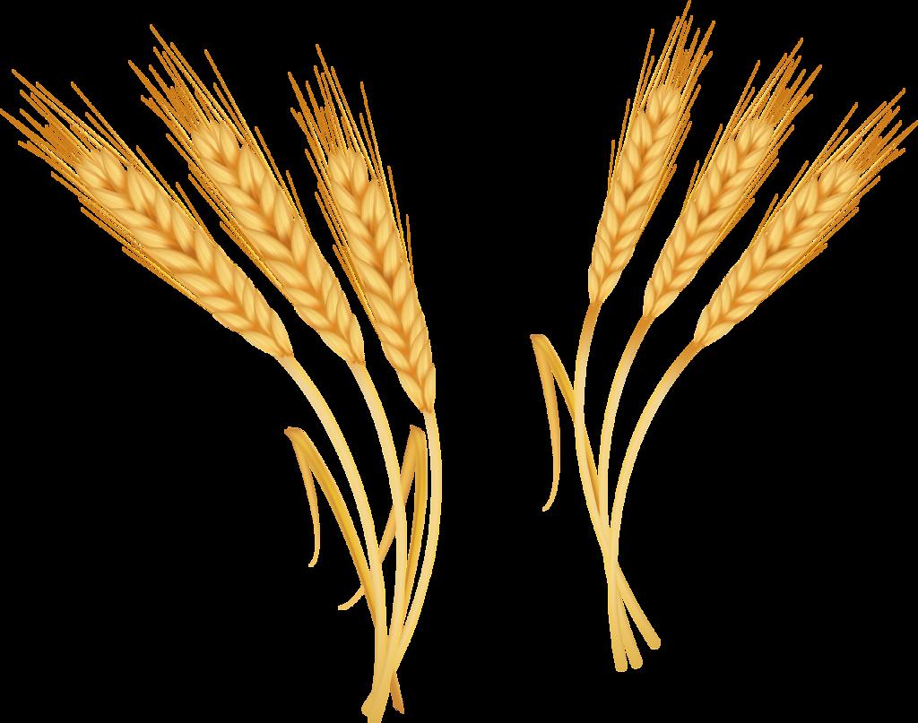 Emmer coreldraw clip art. Wheat clipart rye