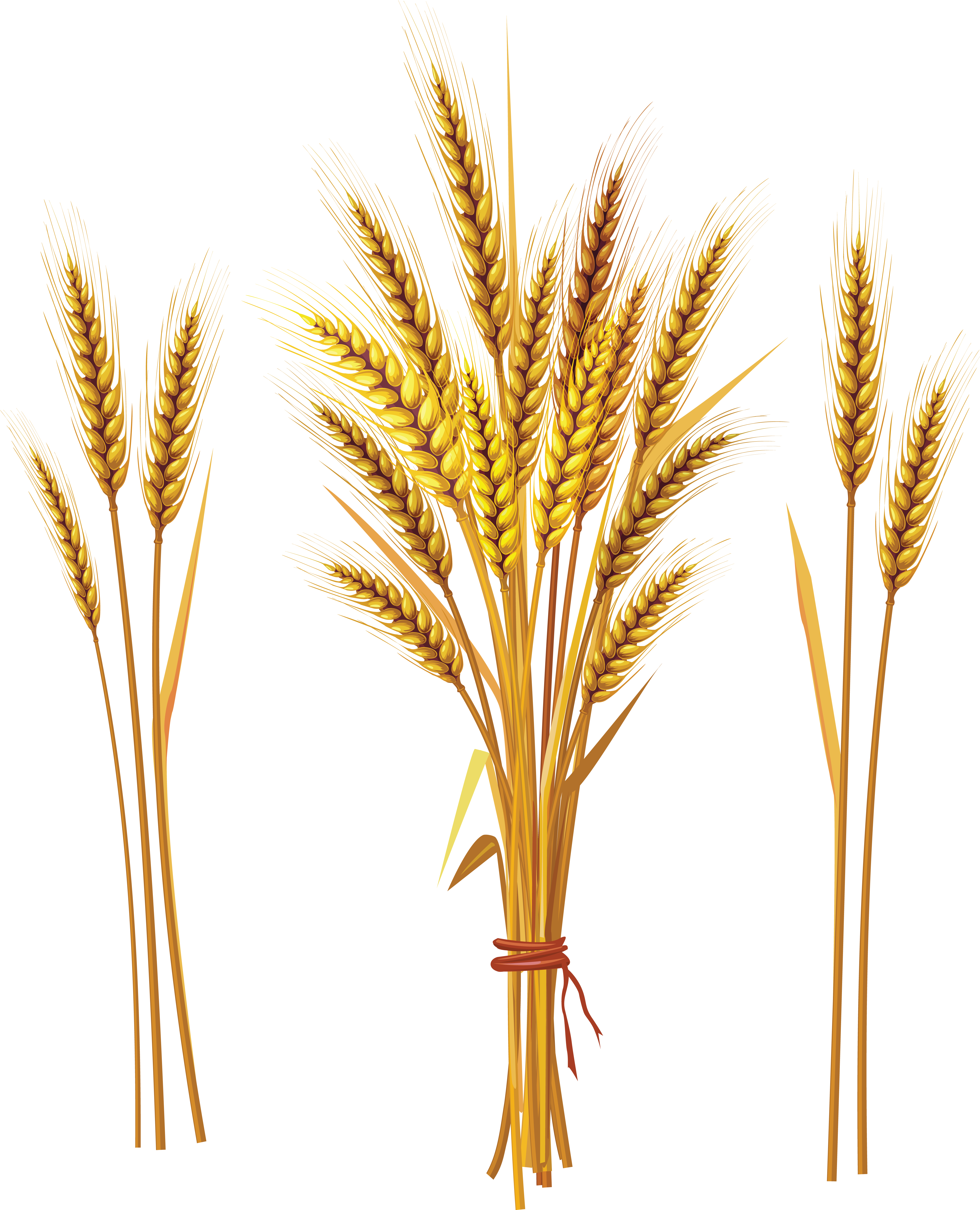 Png . Wheat clipart wheat spike