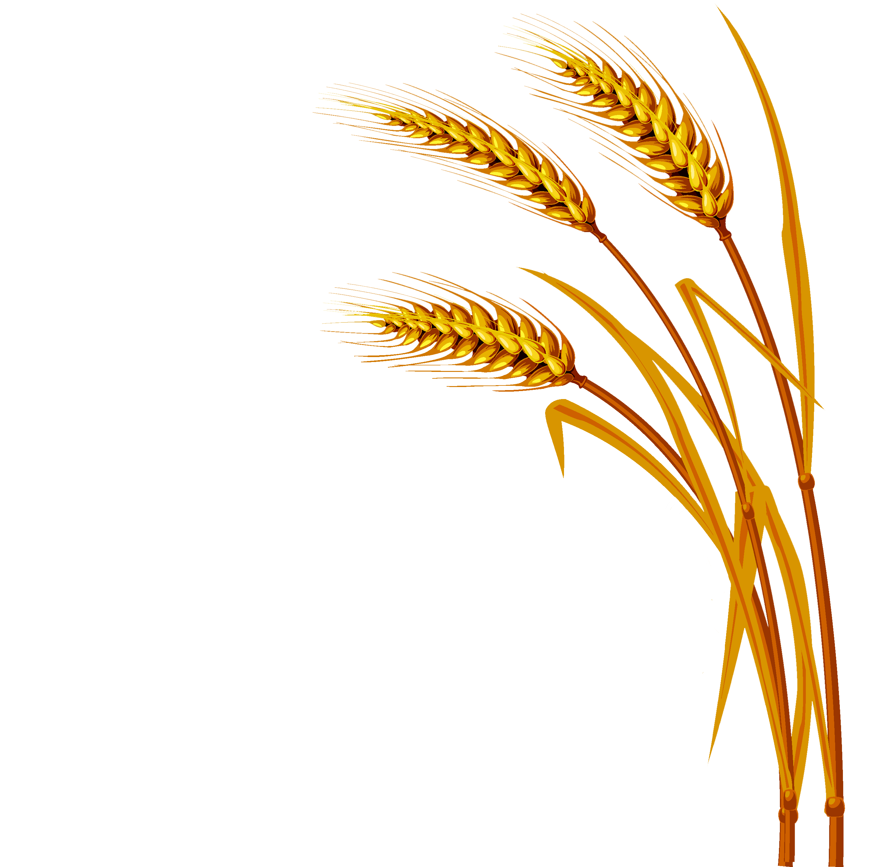 Png . Wheat clipart rye