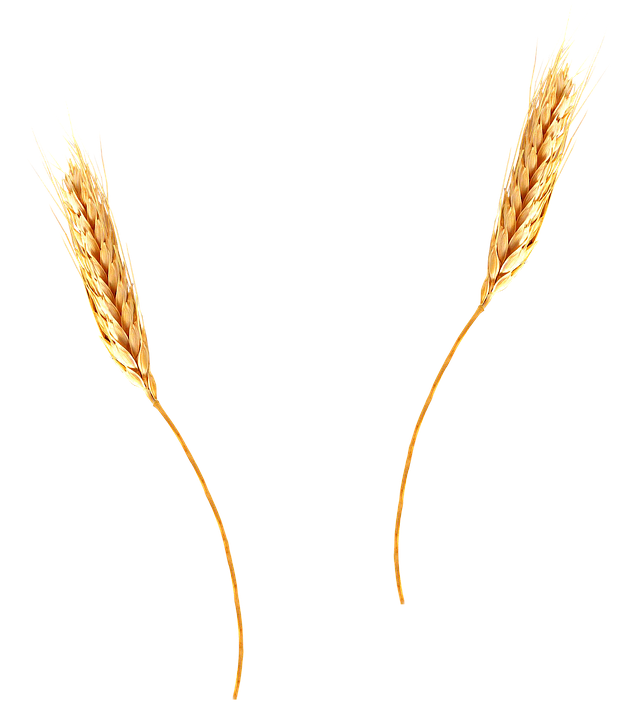 Png . Wheat clipart barley