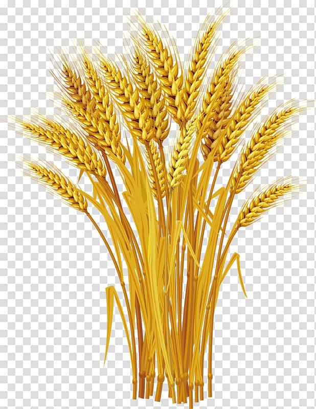 Grass illustration ear yellow. Wheat clipart wheat harvest