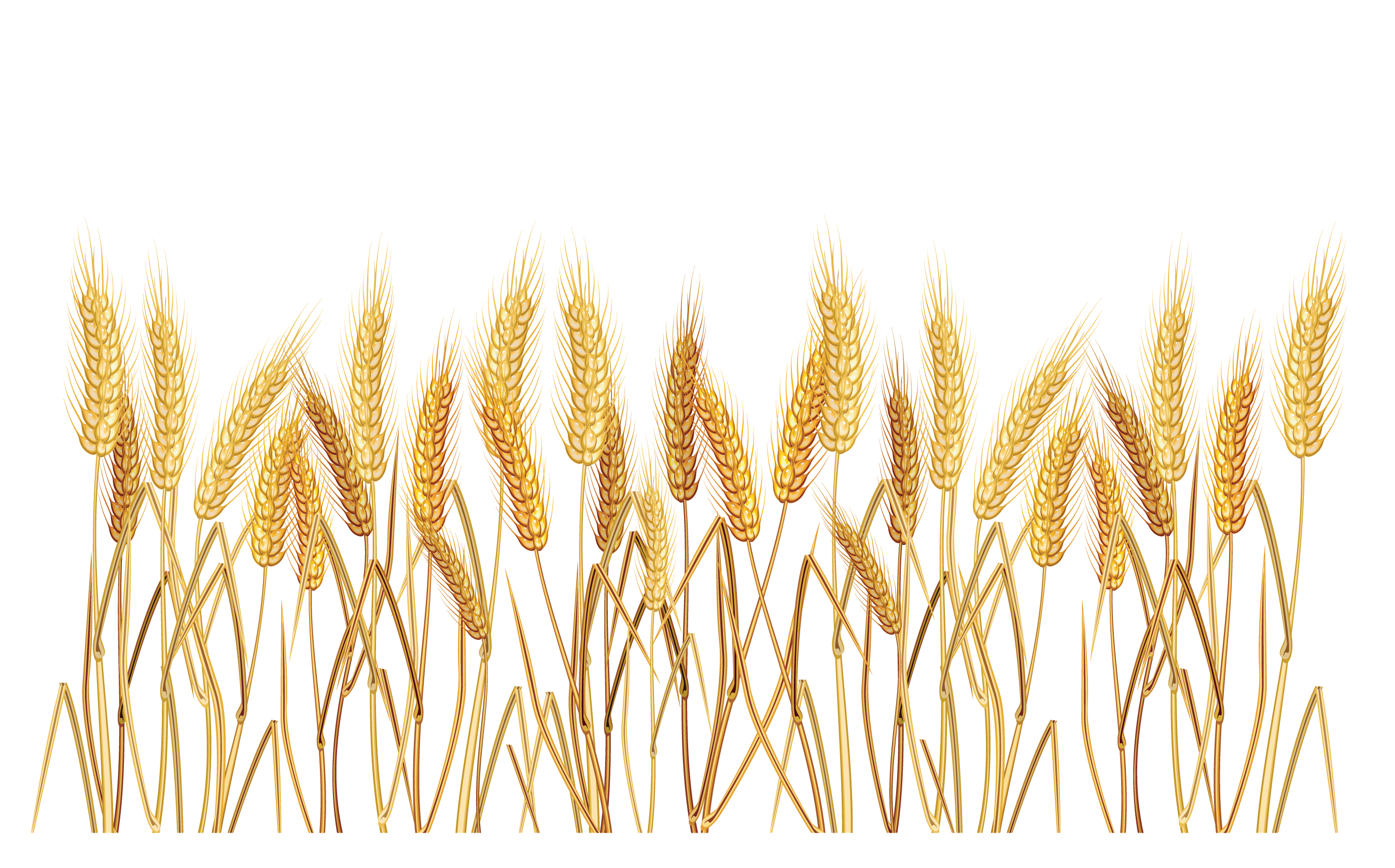 Grain clipart wheat straw.  collection of field