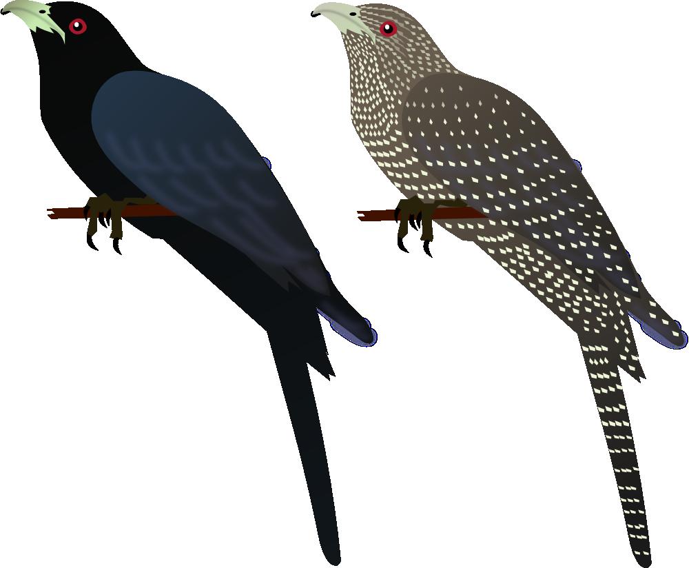 India bird