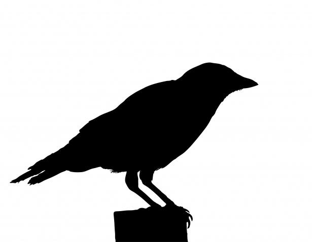 Crow clipart public domain. Bird silhouette free stock