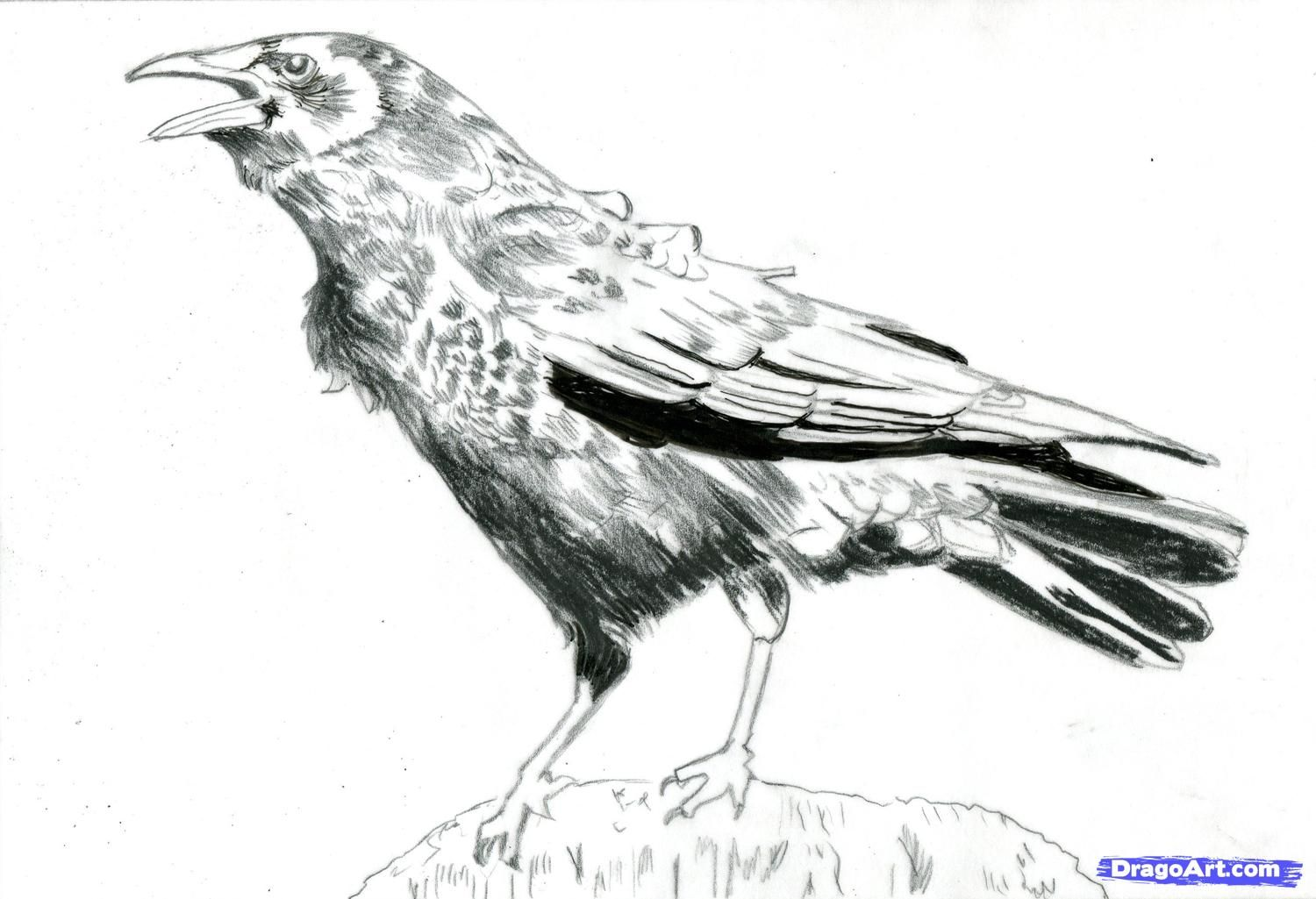 Crow clipart shiny. Free drawn download clip