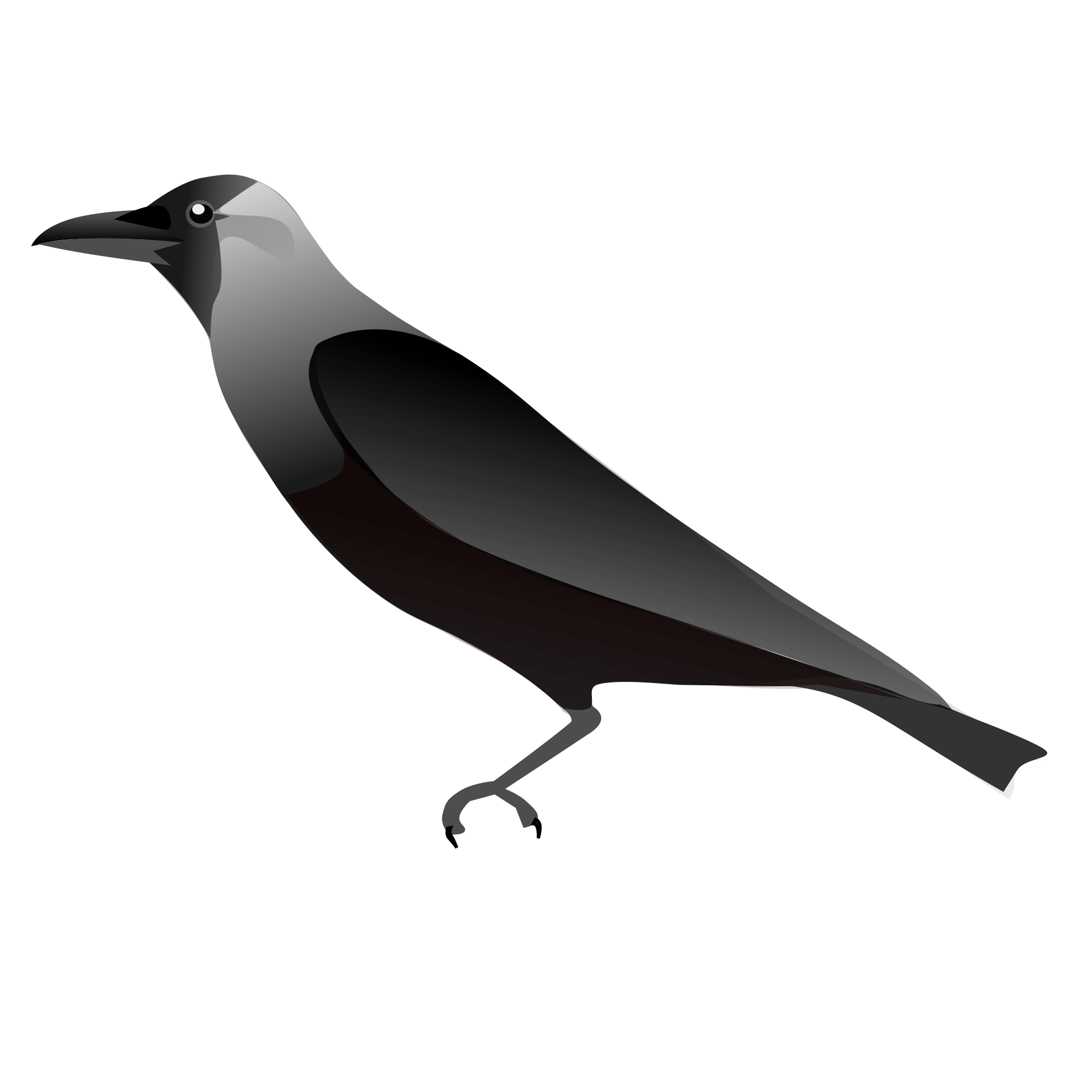 File housecrow wikimedia commons. Crow clipart svg