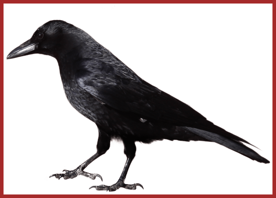 Png all about fascinating. Crow clipart svg