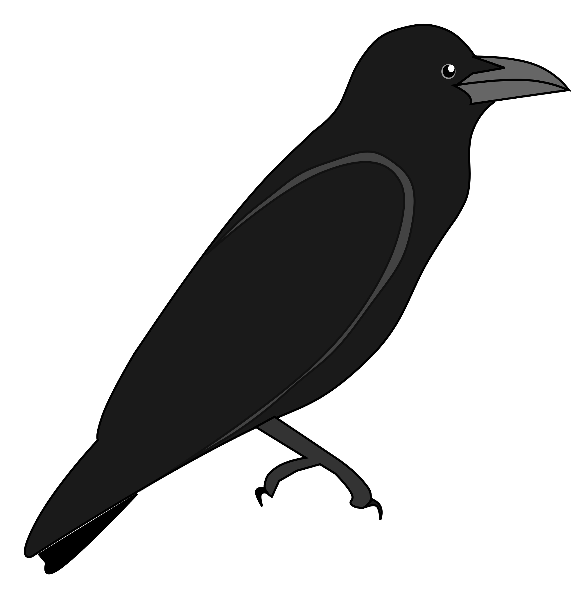 File junglecrow wikimedia commons. Crow clipart svg