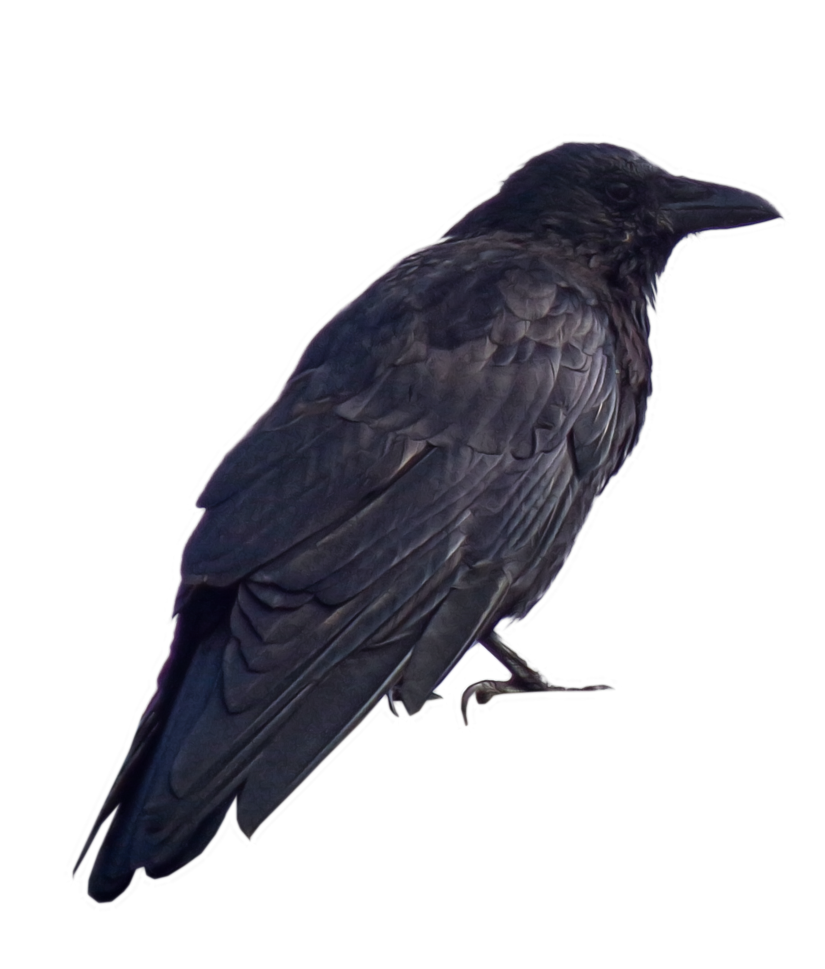Crow clipart victorian. Png by alz stock