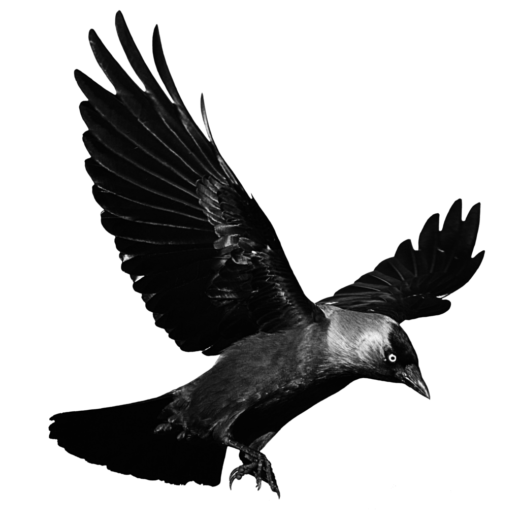 Kite clipart jpeg. Flying crow png black