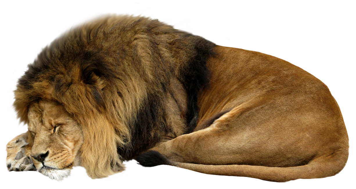 Animal sleeping transparent . Crown clipart lion