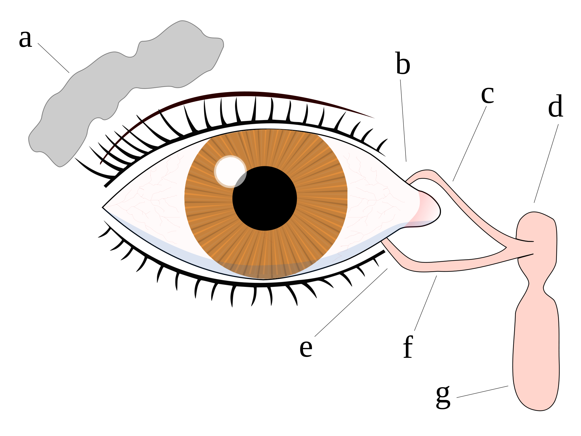 Tears wikipedia. Eyeball clipart eye surgery