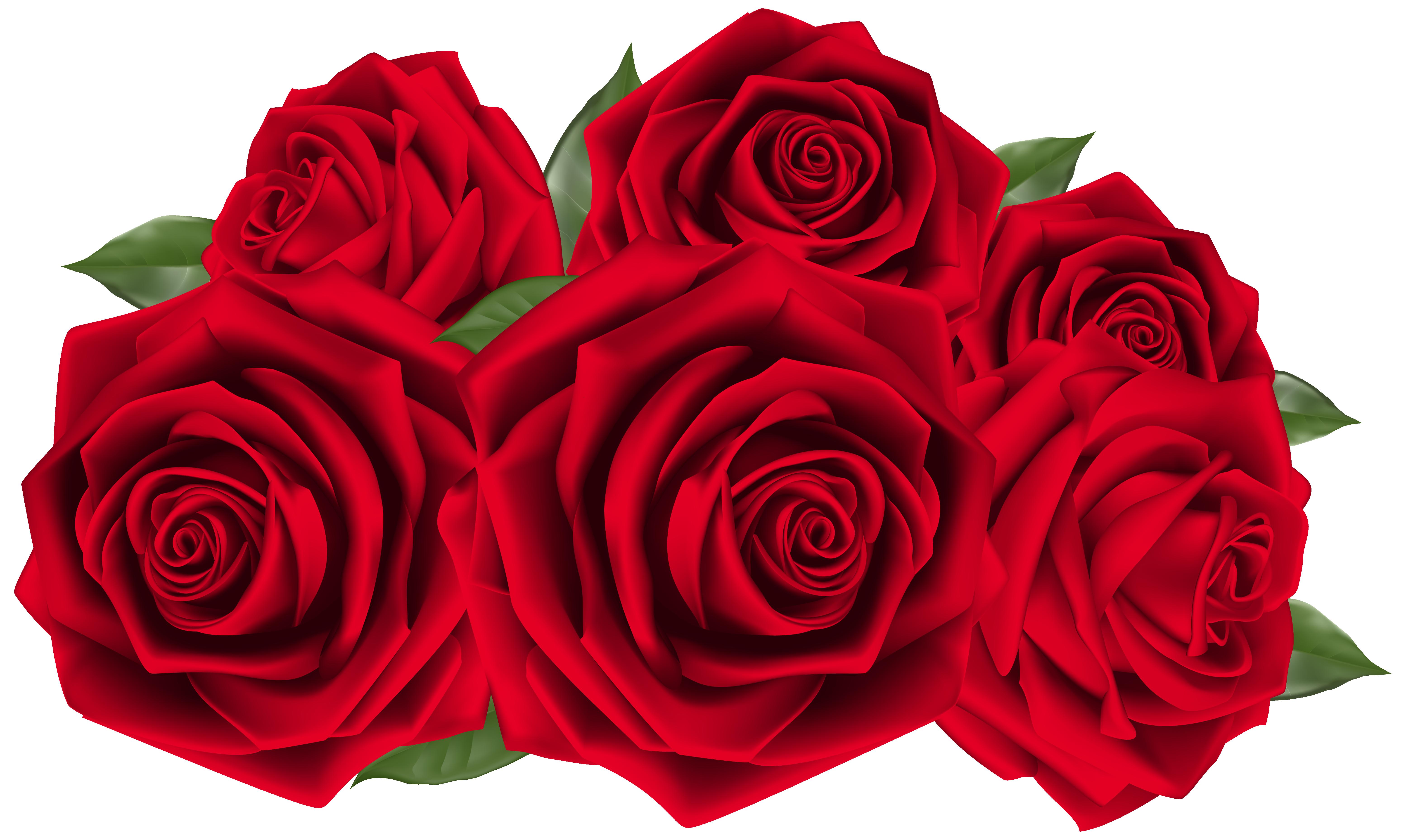 Tomatoes clipart arm leg. Beautiful dark red roses