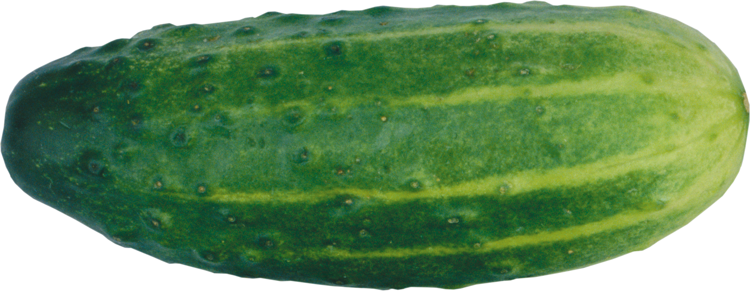 Seven isolated stock photo. Cucumber clipart outline