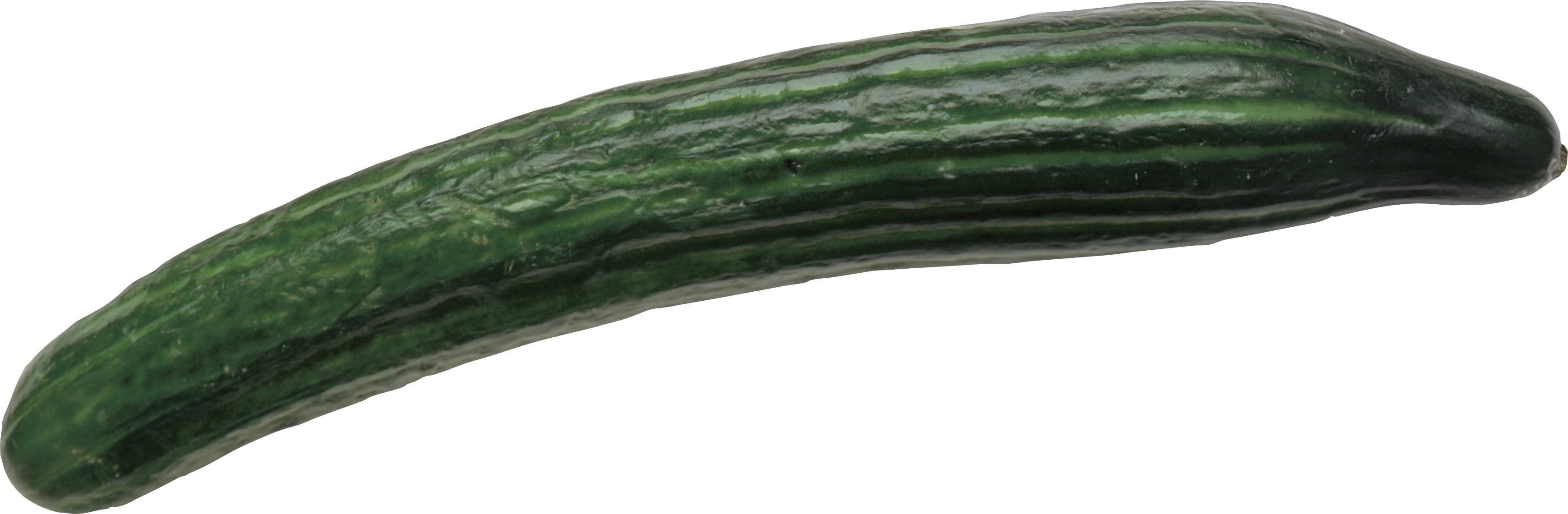 Cucumber four isolated stock. Zucchini clipart green squash