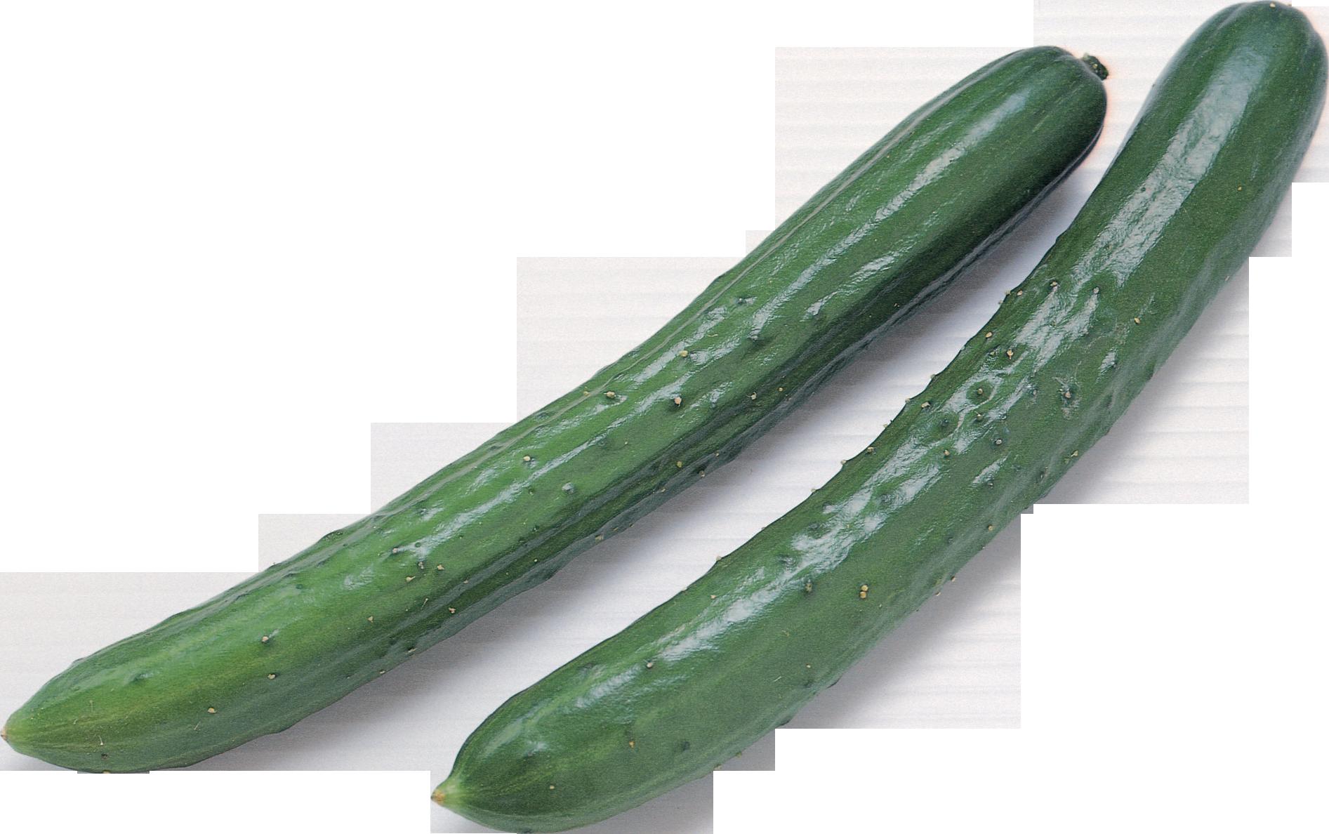zucchini clipart vegetable