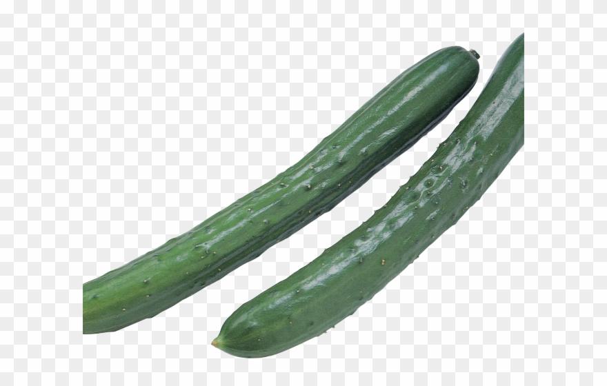 Cucumber png transparent . Zucchini clipart pipino