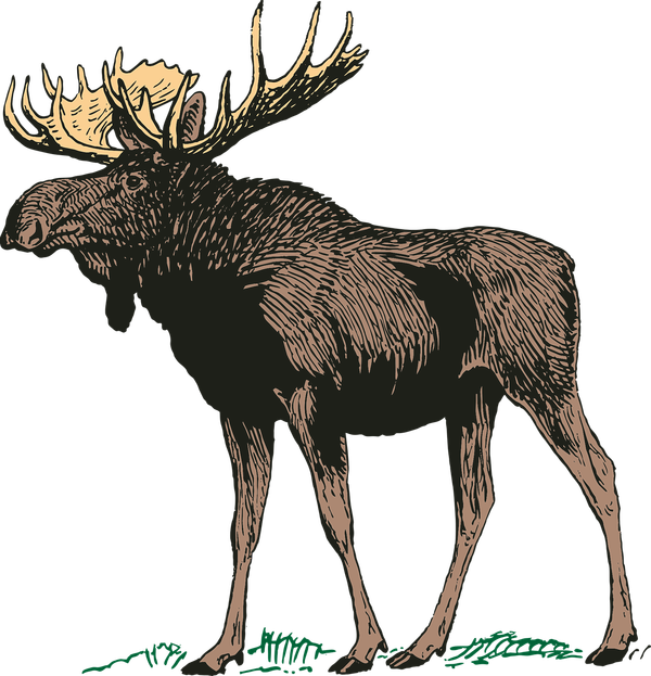 Moose clipart game wild. Cooking with meat whatsupyukon