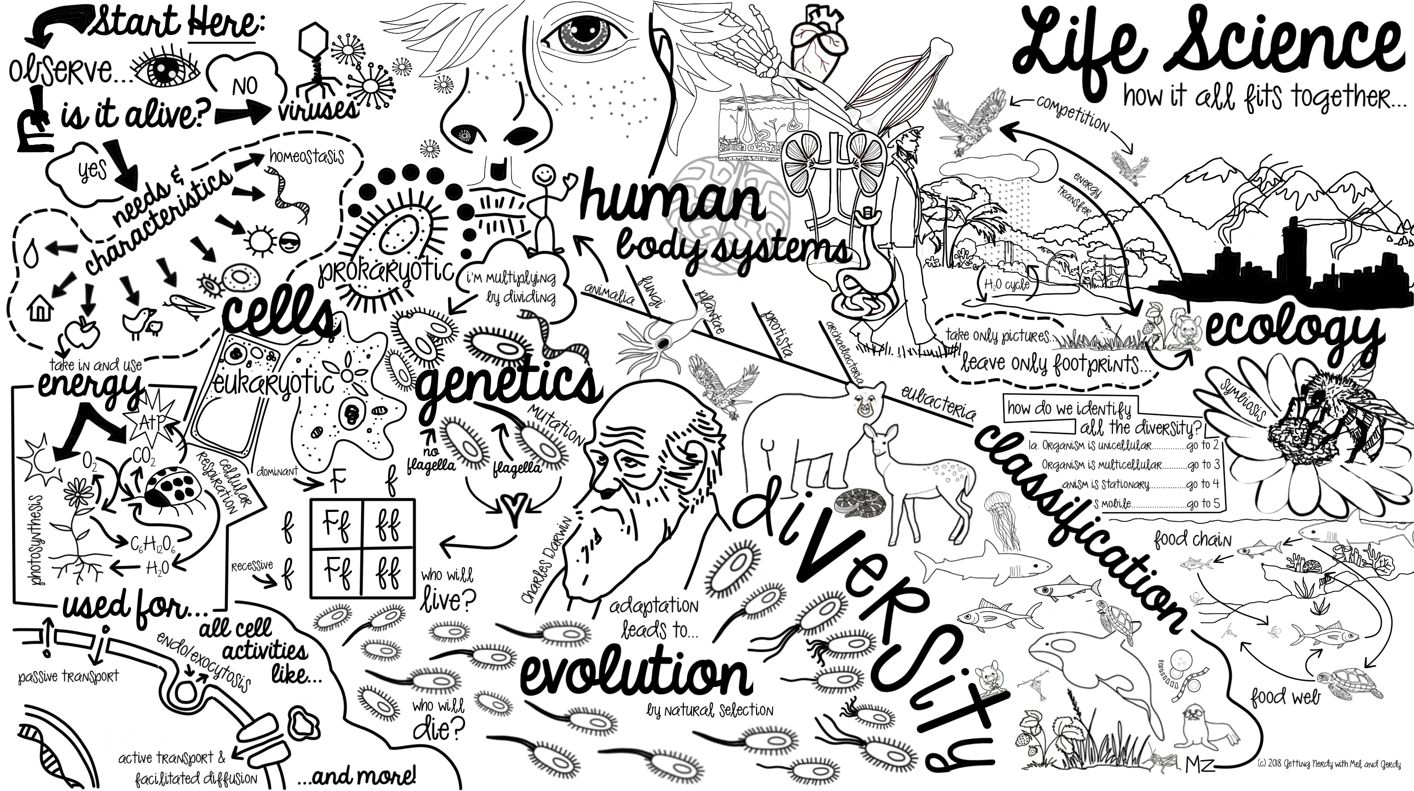 Free doodle map for. Curriculum clipart biology book