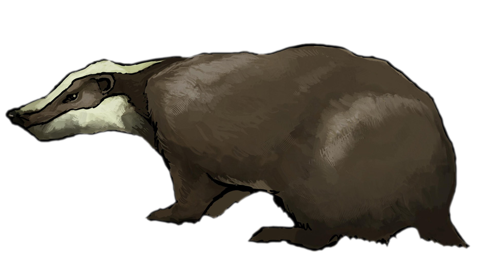 Badger pencil and in. Duckling clipart brown bear