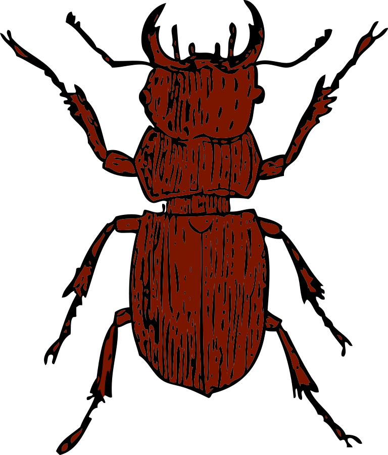 flies clipart beetle
