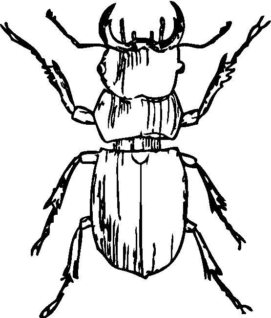 Beetle bettle clip art. Potato clipart black and white
