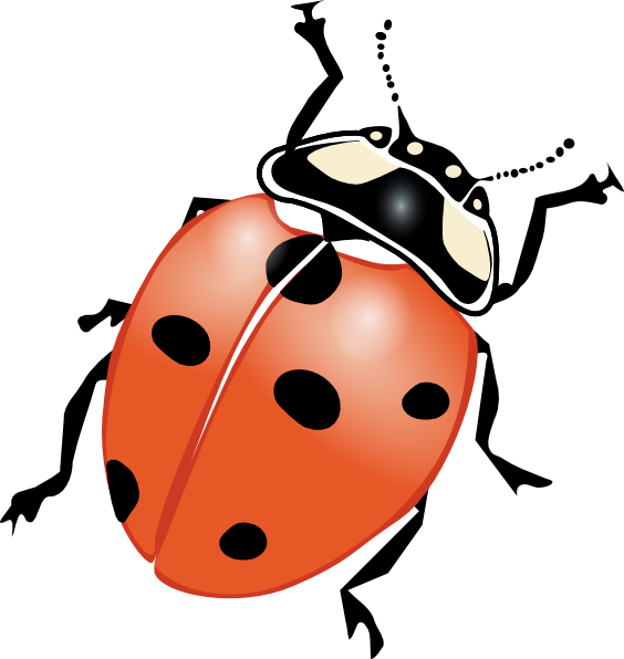 Cute ladybug drawings panda. Ladybugs clipart eye
