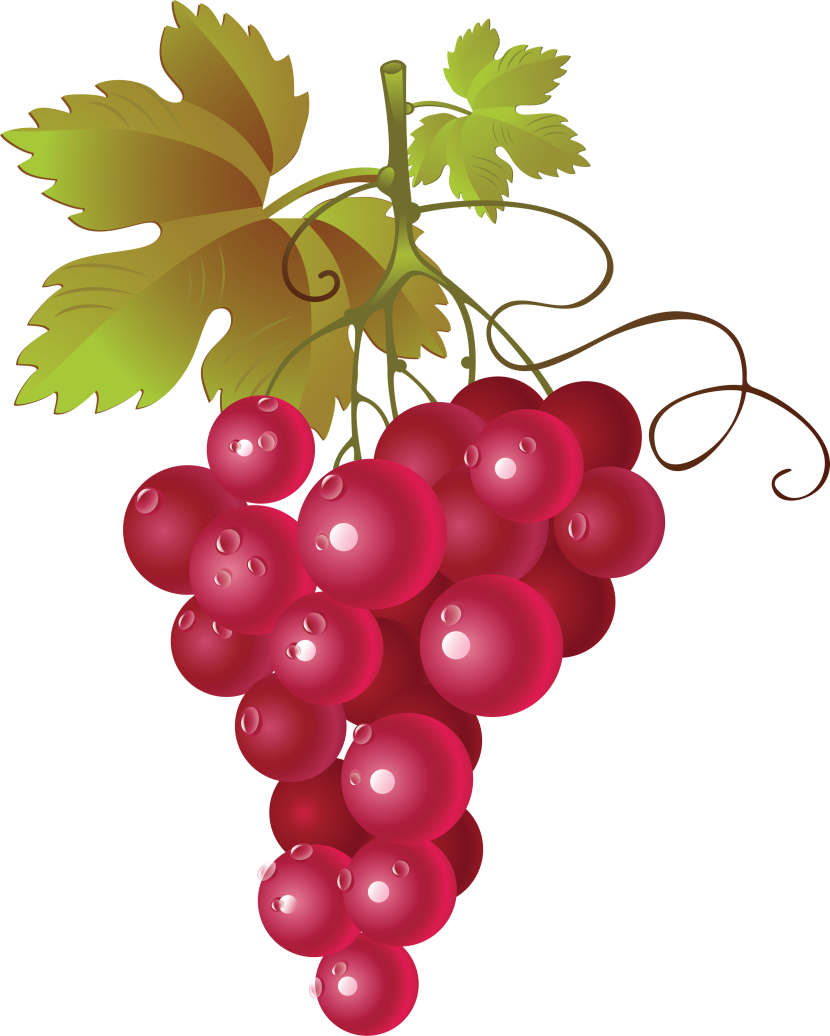 Grapes clipart wine grape. Clipartix