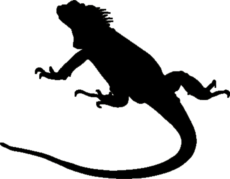 Iguana at getdrawings com. Gecko clipart silhouette