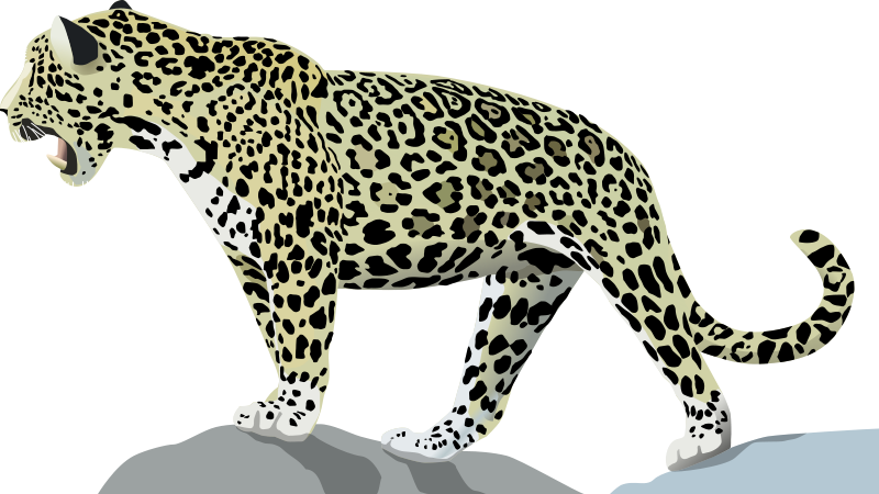 collection of running. Female clipart jaguar