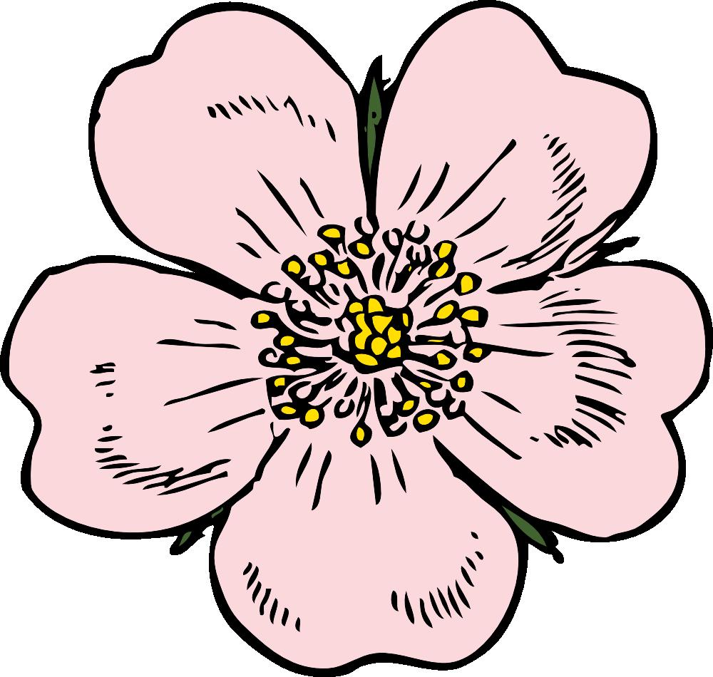 Wild rose clip art. Label clipart cute