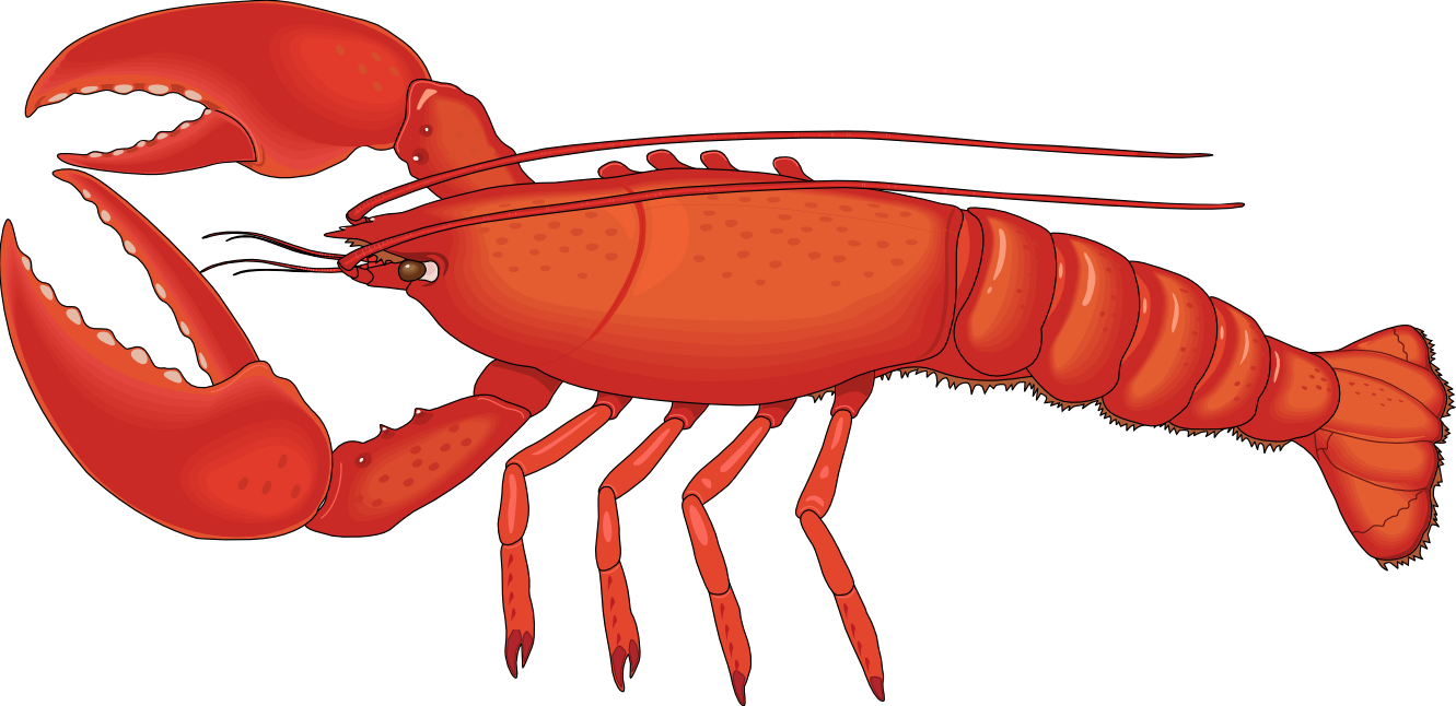 collection of high. Lobster clipart life