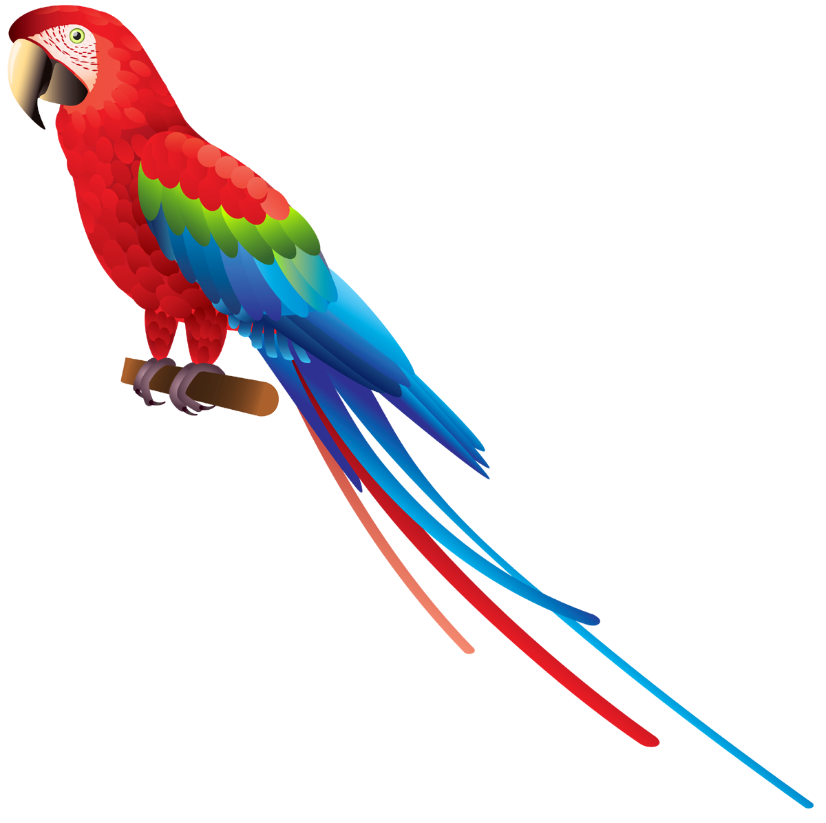 Parrot clipart budgie. Png images free download