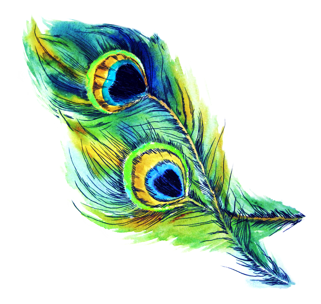 Peacock clipart gold peacock. Feather feathers bird blue