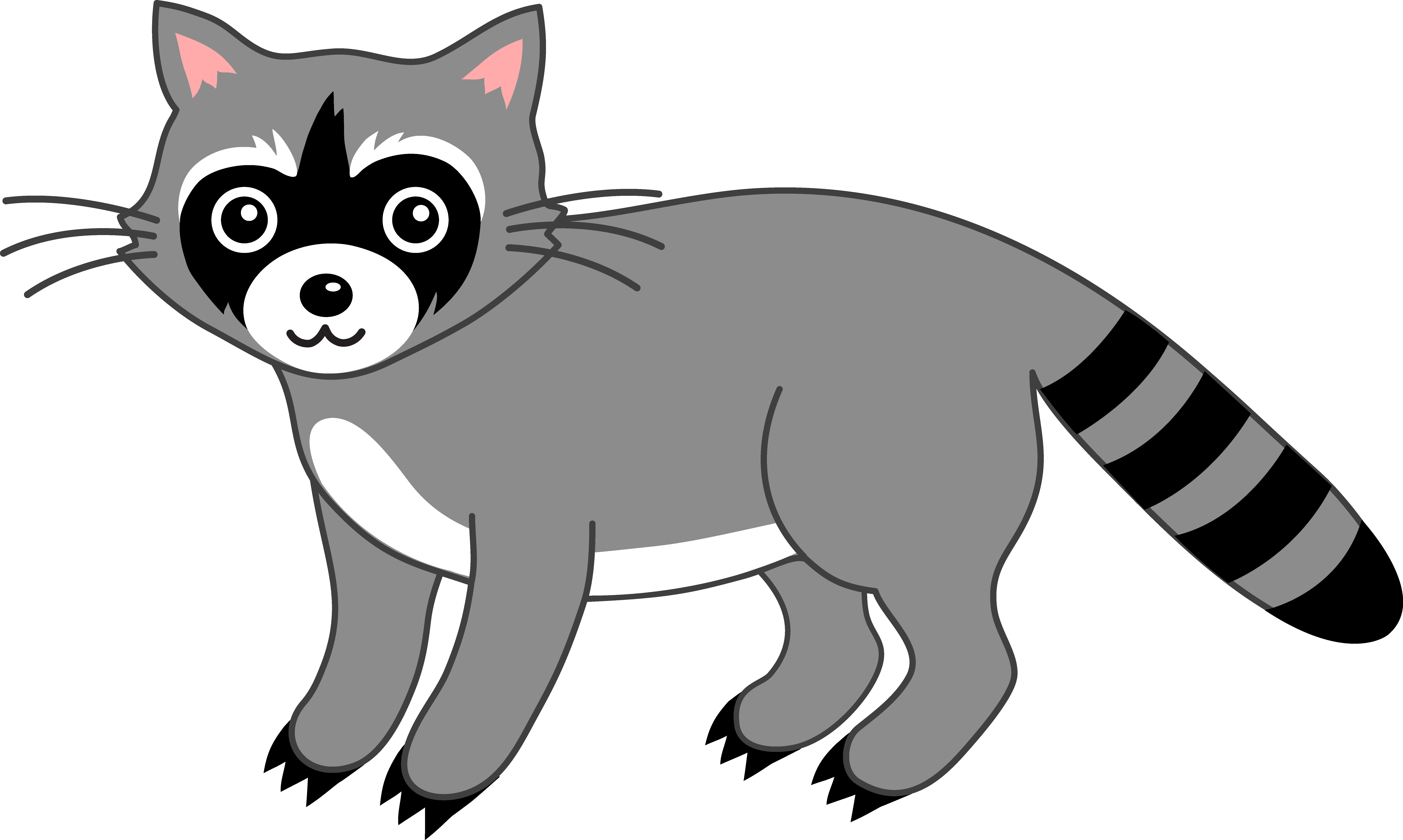 collection of raccoon. Racoon clipart skunk