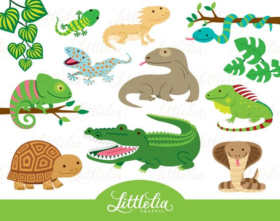 Lizard clipart exotic animal. Reptile cute products clip