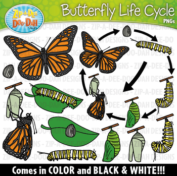 Cycle clipart butterfly. Realistic life zip a
