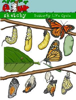 Pin on tpt science. Cycle clipart butterfly