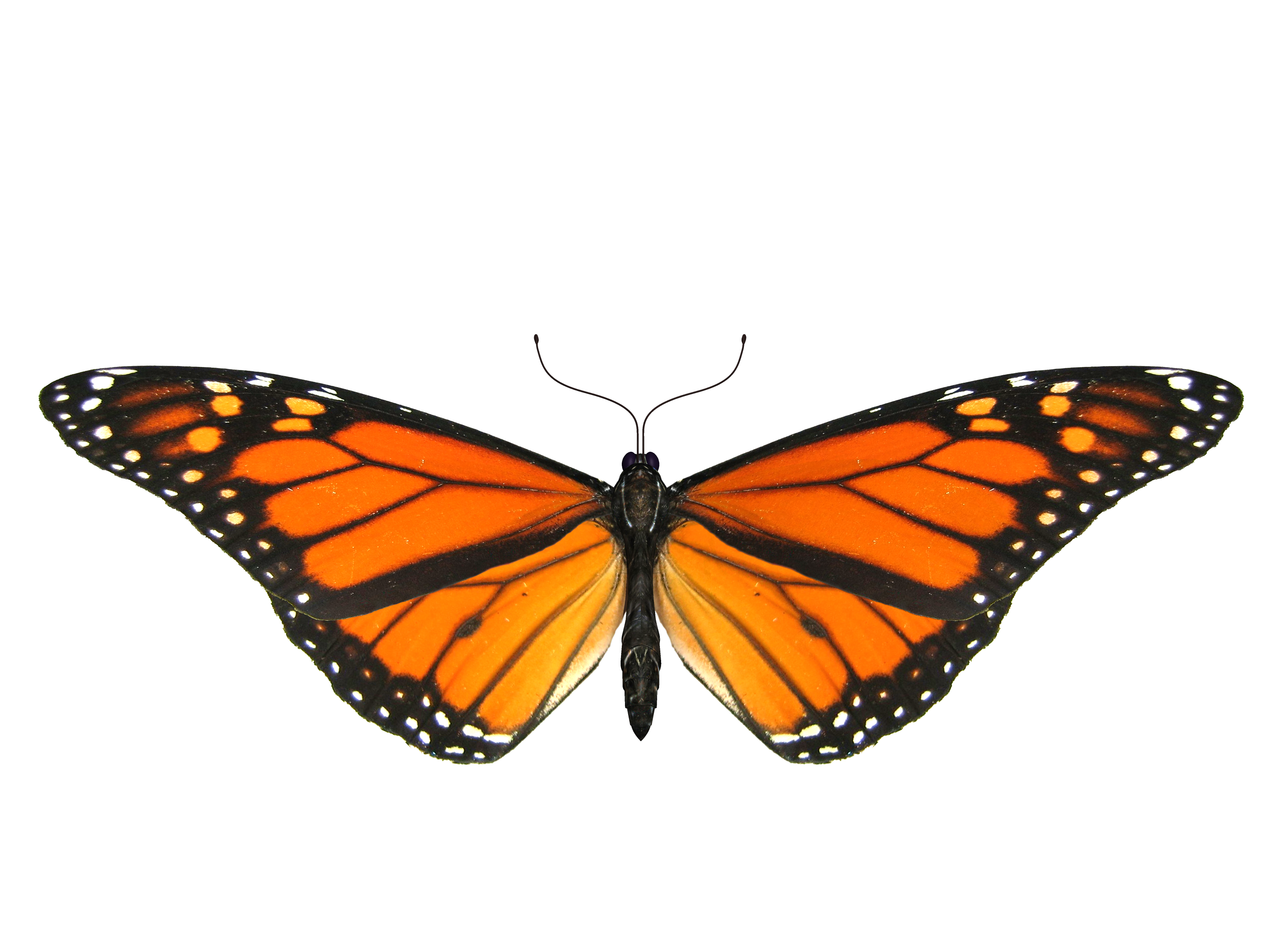 Frog clipart butterfly. Png image