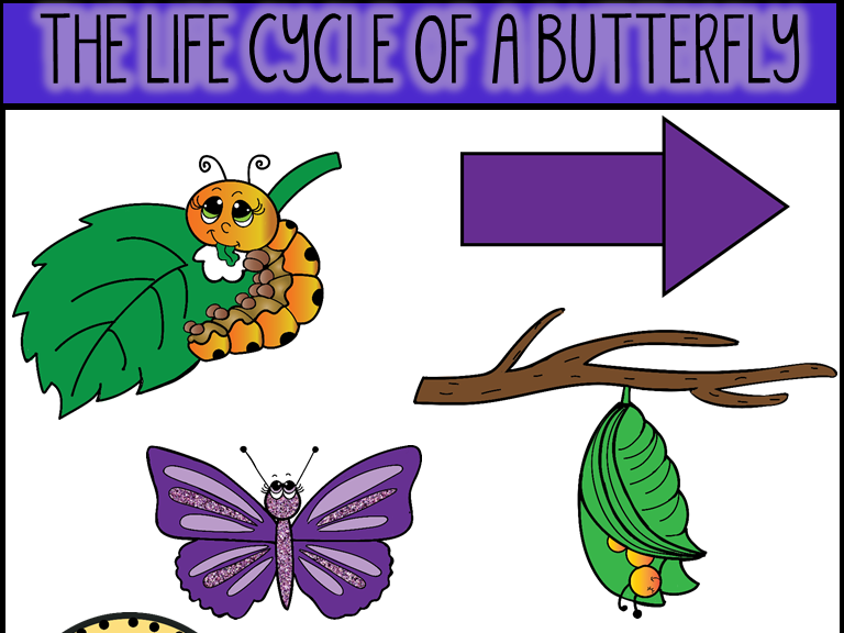 Cycle clipart butterfly. Life of a clip