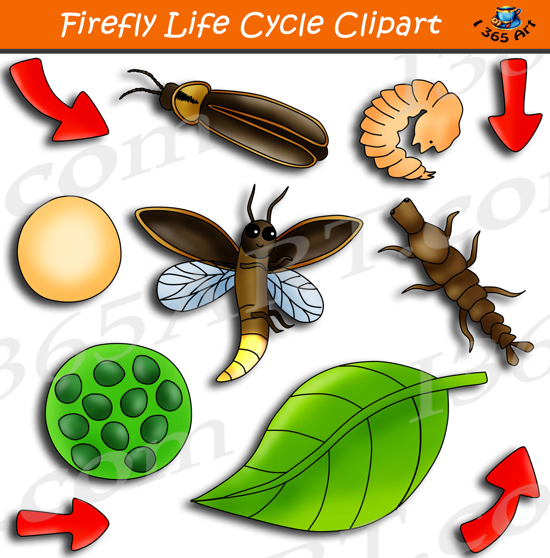 Firefly clipart colorful. Life cycle graphics bundle