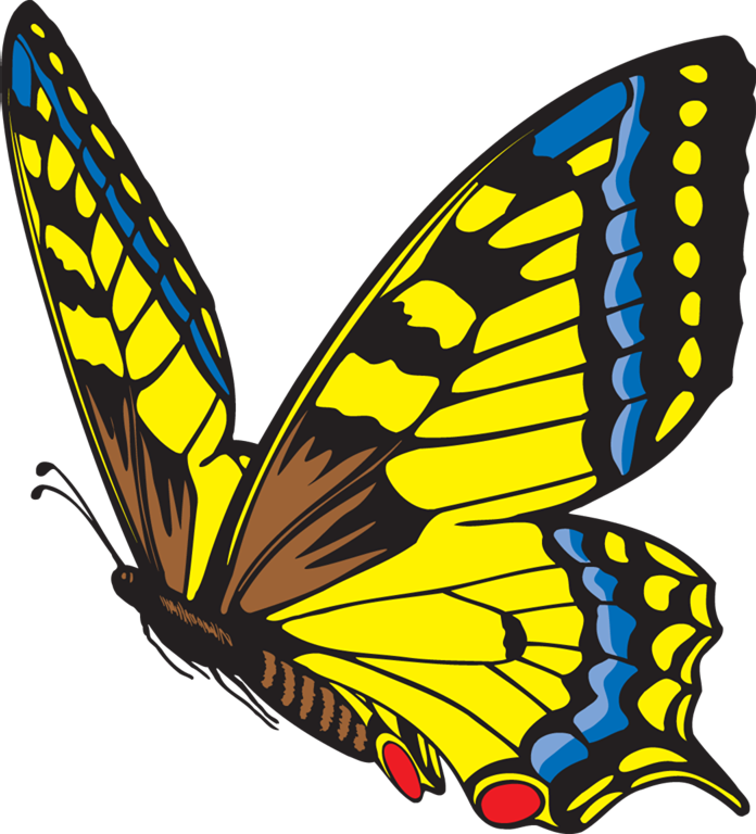 Cycle clipart life cycle. Butterfly metamorphosis the of