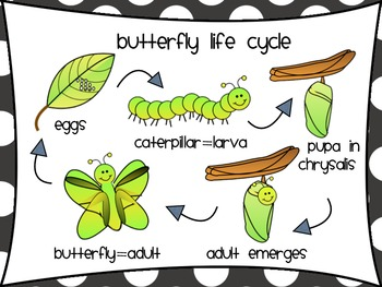 Of butterfly station . Cycle clipart life cycle