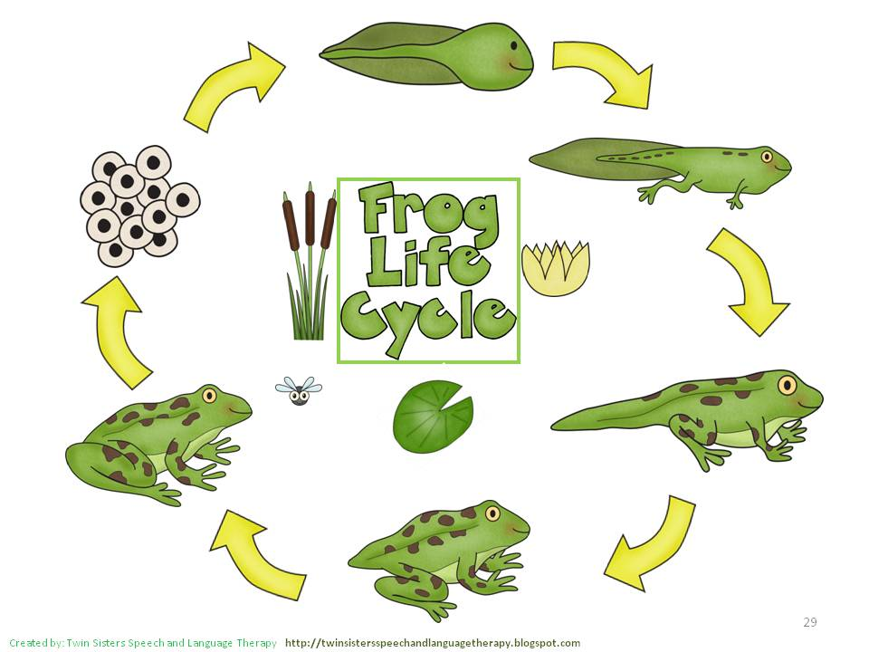 Clip art library . Cycle clipart life cycle